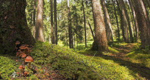 A Pesaro il Cda dell'Associazione Forestale Italiana. Soddisfazione per nuova legge sui boschi