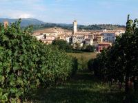 Da Londra a Matelica, i Masters of Wine alla scoperta del Verdicchio