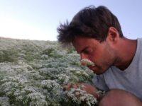 Anice Verde di Castignano è presidio Slow Food. Si rilanciano i progetti di filiera