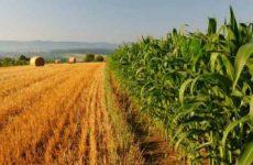 Bandi regionali per imprese agricole prorogati all 8 novembre. Risorse per 14 mln