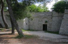 """Ascoli. Via i pini secolari dalla storica Fortezza Pia, Legambiente dice no: 'Proteste eclatanti""""."""
