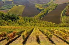 """L'autunno marchigiano si fa """"Rosso Piceno"""" . Gli eventi di ottobre e novembre per il 50esimo della Doc"""