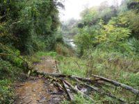 Ascoli. Italia Nostra denuncia : 'Pista sul Fiume Castellano in totale abbandono'