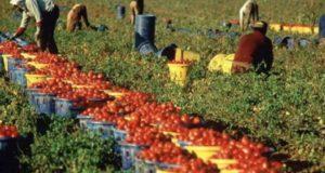 Agromafie nelle Marche, un terzo alimentari stranieri a rischio illegalità. Speculazioni nel sisma