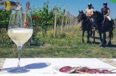 Passeggiare a cavallo per scoprire il vino, il cibo e la bellezza del territorio. Al via Equi-Wine Marche