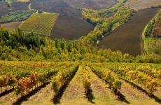 """Aspiranti """"Master of Wine"""" da tutto il mondo nel Piceno per scoprire le Doc regionali"""
