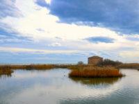 Salvare le zone umide del pianeta. Birdwatching ed escursioni alla Riserva della Sentina il 3 febbraio