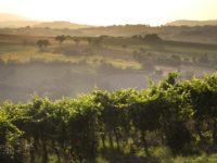Forte crescita produzione ed export per i vini marchigiani. A Verona Imt e Consorzio Piceno