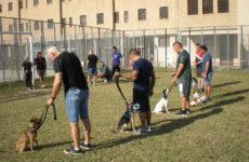 Pet therapy in carcere per riabilitare i detenuti