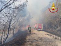 """Cinquestelle : """"Troppi incendi, ripristinare il Corpo Forestale dello Stato"""""""