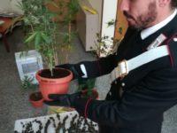 """Grottammare, arrestato tunisino con 250 grammi di """"fumo"""""""