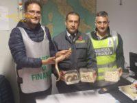 Maxi sequestro di 138 pitoni al porto di Ancona, denunce