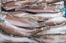 Nas Ancona sequestra tonnellata di pesce in tre province, denunce