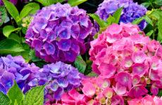 Ok a vendita piante e fiori nei negozi e centri commerciali