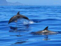 Dissuasori acustici per salvare i delfini durante la pesca