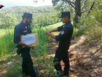 Monitoraggio Thc nella canapa, convenzione Politecnica Marche con Carabinieri