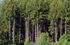 Comunanza, tagliano intero bosco con alberi alto fusto. Denunciati