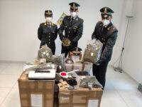 Fiamme Gialle di Fermo sequestrano 31 chili di marijuana
