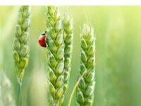 """A Fano la """"Giornata del cibo biologico"""""""