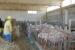 Tra sisma e covid perse il 20% delle fattorie marchigiane
