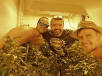 Tre ragazzi dall'Alto Adige a Comunanza per produrre cannabis light