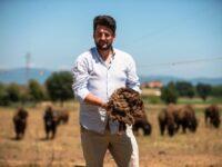 In Umbria riprende l'allevamento dei bisonti