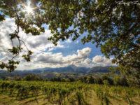 Viticoltura innovativa e sostenibile : ecco il progetto New Vineyard