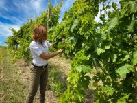 Il Bianchello di Fiorini premiato al Wine Challenge di Londra