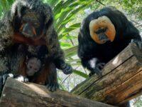 Il Parco Zoo di Falconara riapre con un lieto evento