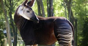 Gli okap del Parco Zoo di Falconara ispirano un libro