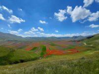 """Parco dei Monti Sibillini : """"Rispettare la fioritura di Castelluccio"""""""