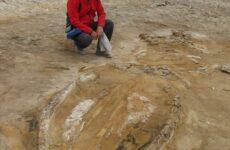 In Perù il più grande giacimento di fossili del mondo