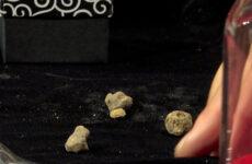A Pergola l'asta per il tartufo più piccolo del mondo